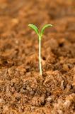 Nuevo concepto de la vida - plantas de semillero verdes imagen de archivo libre de regalías