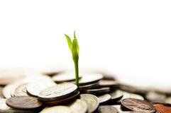 Nuevo crecimiento Imagen de archivo libre de regalías