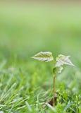 Nuevo crecimiento de la vida Imagen de archivo libre de regalías
