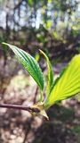 Nuevo crecimiento en primavera fotos de archivo libres de regalías