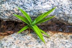 nuevo crecimiento verde del crecimiento m?s berrier de la grava y de las piedras fotografía de archivo libre de regalías