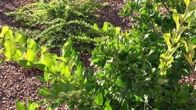 Nuevo establecimiento de las camas del jardín con las plantas, arbustos Diseño del jardín