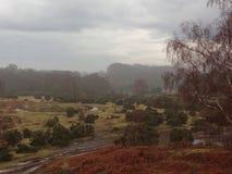Nuevo Forest Skyline fotos de archivo libres de regalías