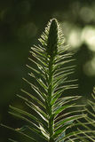 Nuevo growth1 imagenes de archivo