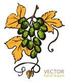 Nuevo nouveau del Beaujolais del vino Foto de archivo libre de regalías
