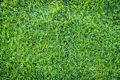 Nuevo patio de la nueva textura natural de la hierba verde Fotografía de archivo