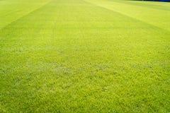 Nuevo patio de la nueva textura natural de la hierba verde Imágenes de archivo libres de regalías