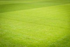 Nuevo patio de la nueva textura natural de la hierba verde Foto de archivo libre de regalías