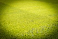Nuevo patio de la nueva textura natural de la hierba verde Imagen de archivo