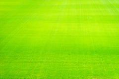 Nuevo patio de la nueva textura natural de la hierba verde Foto de archivo