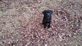 Nuevo perrito Imágenes de archivo libres de regalías