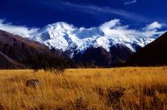 Nuevos cocinero e hierba del montaje de Zealand- en frente Imagen de archivo
