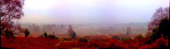 Nuevos colores panorámicos del otoño del bosque foto de archivo libre de regalías