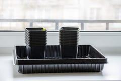 Nuevos envases de plástico vacíos para los almácigos en el alféizar Imágenes de archivo libres de regalías