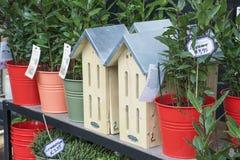 Nuevos nidal con las plantas en el estante de madera con precios Foto de archivo libre de regalías