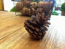 Nuez de pino Fotografía de archivo