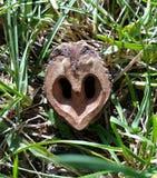 Nuez del árbol del corazón Imágenes de archivo libres de regalías