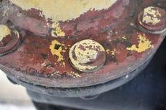 Nuez teñida hecha girar Foto de archivo libre de regalías