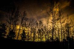 Nuit à feuilles persistantes d'hiver Photo stock