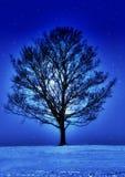 Nuit étoilée images libres de droits