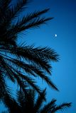 Nuit africaine Photographie stock