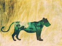 Nuit africaine avec Lion Grunge Photos stock
