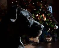 Nuit avant Noël Photographie stock libre de droits