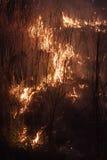 Nuit brûlante de roseaux Images libres de droits