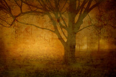 Nuit brumeuse Image libre de droits