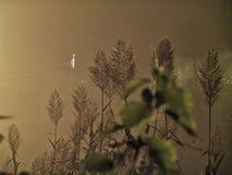 Nuit brumeuse de paysage Photo stock