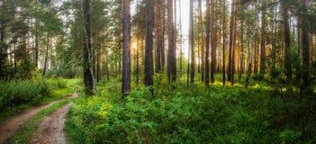 Nuit brumeuse de paysage d'été dans une forêt de pin avec un chemin de terre, Russie, Ural Photos libres de droits
