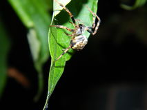 Nuit d'araignée Photo libre de droits