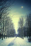Nuit d'hiver avec des amis en parc Photo libre de droits