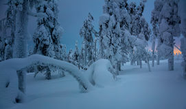 Nuit d'hiver dans la forêt congelée après tempête de neige de neige Photos libres de droits