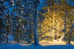 Nuit d'hiver dans les lumières rougeoyantes de forêt et d'arbre de Noël Photos stock