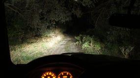 Nuit dans la forêt Photos libres de droits