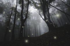 Nuit dans la forêt enchantée par magie de conte de fées photo libre de droits