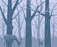 Nuit dans la forêt profonde Photos libres de droits