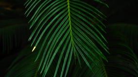 Nuit dans les jungles, belle usine de paumes avec de longues feuilles banque de vidéos