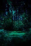 Nuit dans une forêt Image stock