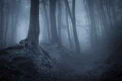 Nuit dans une forêt mystérieuse Photo stock