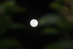 Nuit de clair de lune et ombre du ` s d'arbre Photos libres de droits