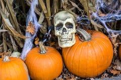 Nuit de Halloween avec le crâne de mais de potirons Photo stock