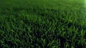 Nuit de pelouse de stade de football de champ banque de vidéos