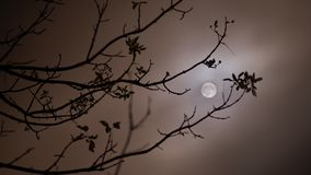 Nuit de pleine lune Photos stock