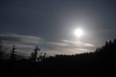 Nuit de pleine lune avec des silhouettes d'arbre Photo stock
