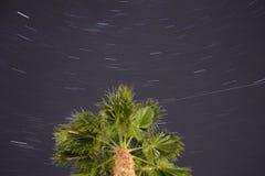 Nuit de rotation autour de palmier Images libres de droits