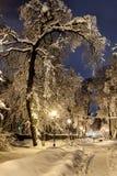Nuit du paysage d'hiver Photographie stock