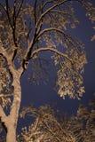 Nuit du paysage d'hiver Photo stock