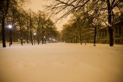 Nuit en parc photo stock